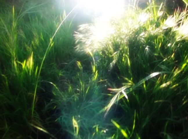 Flying through Greens and Sunlight 02 Slow Motion VJ Loop 210fps