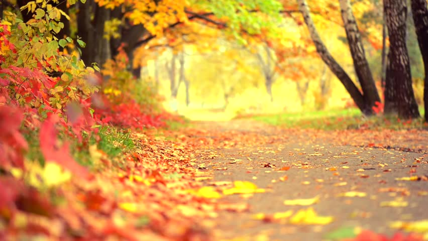 Autumn Park Background Fall Beautiful Stock Footage Video 100