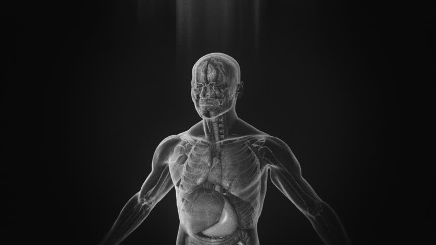 X-Ray of the human body, 3D simulation