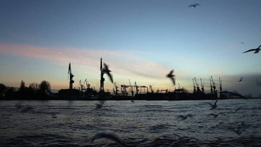 Flock of seagulls in Hamburg, Germany