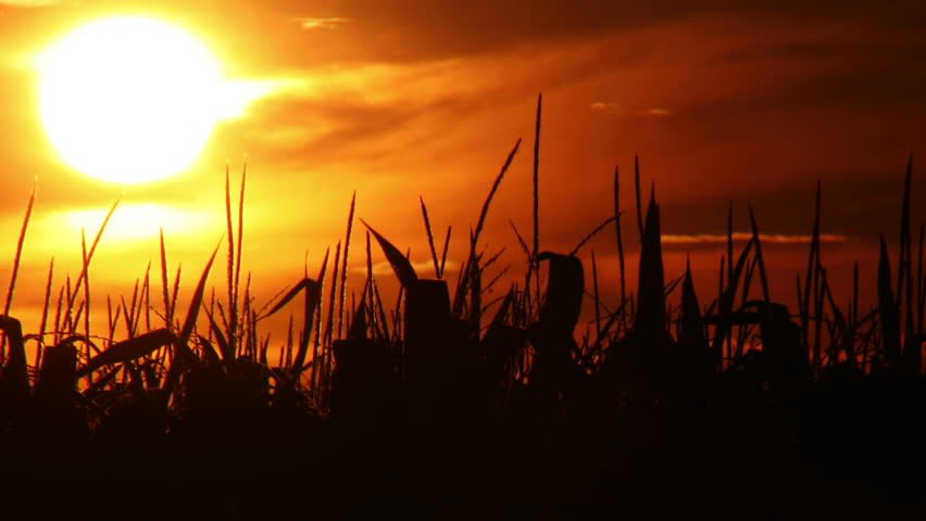 Time lapse of a sunset behind the silhouette of a corn field.