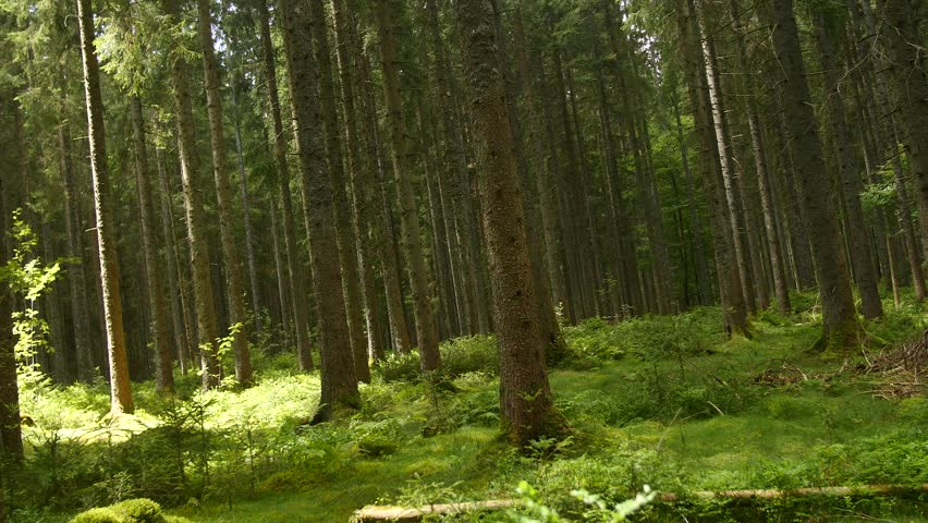 In the forest | Shutterstock HD Video #13710773