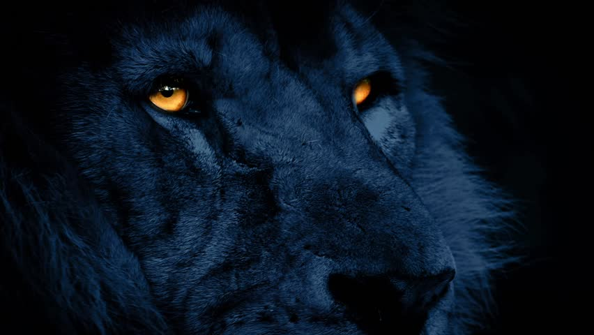 Lion Face At Night With Glowing Eyes