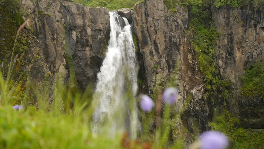 Flowers on the background of a waterfall. Iceland.