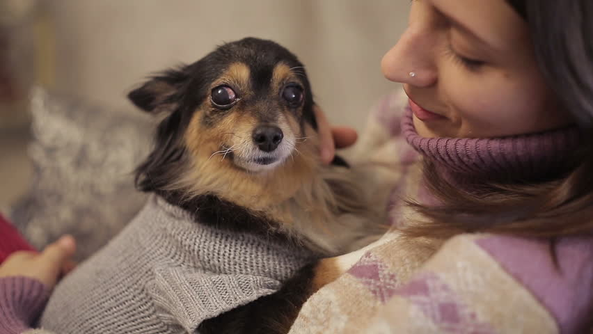 Small dog loves mistress   Shutterstock HD Video #14056574