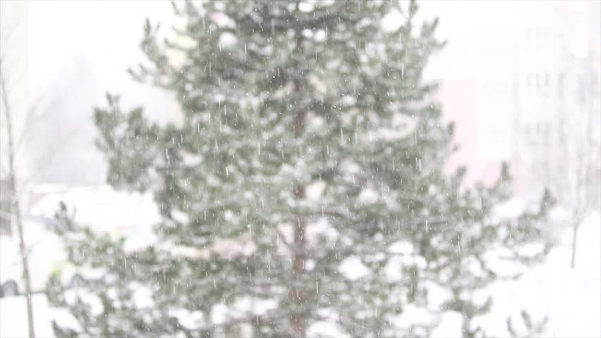 Falling snow  and green tree , cold winter day,winter background | Shutterstock HD Video #14100773