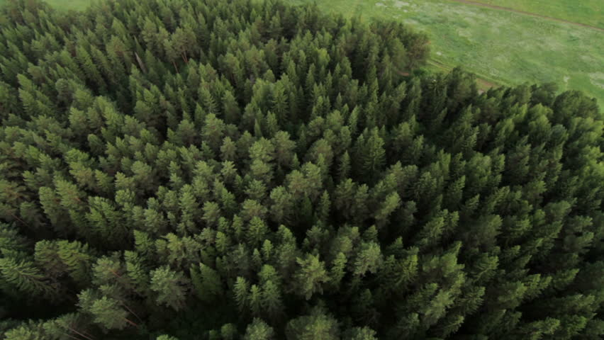 Flying Over Beautiful Forest Trees Stock Footage - Video: 91344104