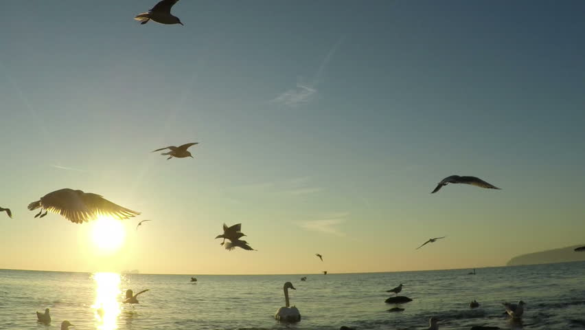 SLOW motion, Seagull Birds flying and fishing in the sea. Beautiful sunrise over the ocean, sun flare. | Shutterstock HD Video #14238443