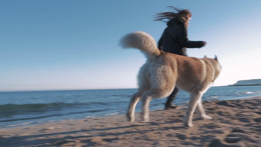 Young girl running with siberian husky on sea...