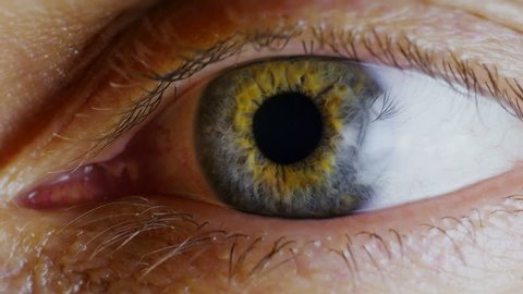Human eye. Close up. Human eye iris contracting.