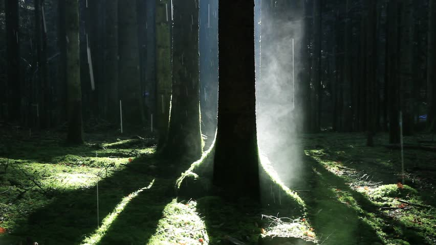 Mystical morning foggy forest scene with misty steam and rain.  | Shutterstock HD Video #14451373