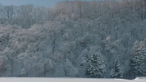 Hoarfrost Trees & Blue Sky in Hokkaido, Japan