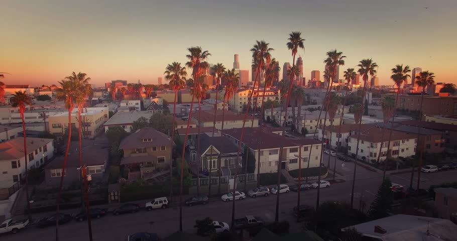 Beautiful aerial view of downtown Los Angeles skyline revealing through row of palm trees. 4K UHD.