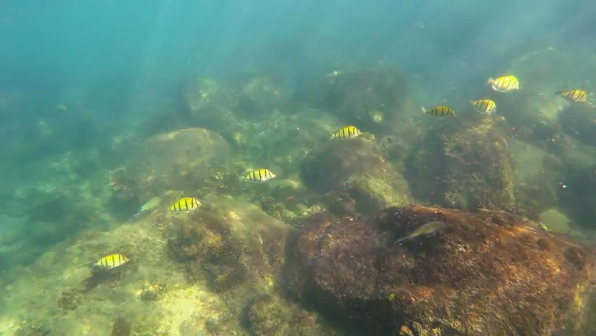 Underwater View Of The Lake And Its Lake Bed. The Soil ...