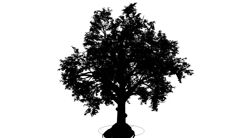 Broadleaf, Deciduous Tree, Silhouette Of Animated Tree Is Swaying At The  Wind, Small Branchy Crown, Round Shaped Crown, Branches Are Staggering, ...