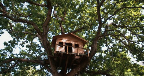 Establishing shot of rustic wooden treehouse situated in the branches of a huge green-leafed oak tree in a lush grassy park