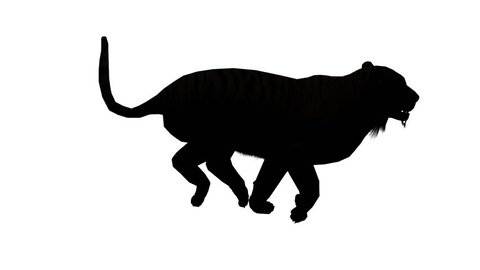 Tiger running sketch silhouette,wildlife animals habitat. cg_02095
