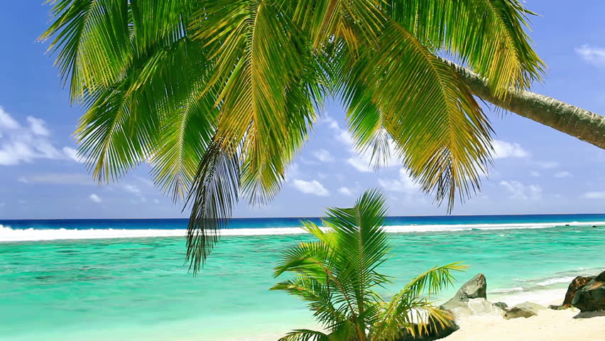Palm tree on tropical beach of Rarotonga, Cook Islands