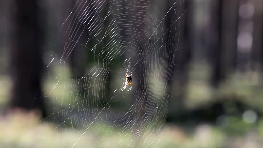 spider in ambush