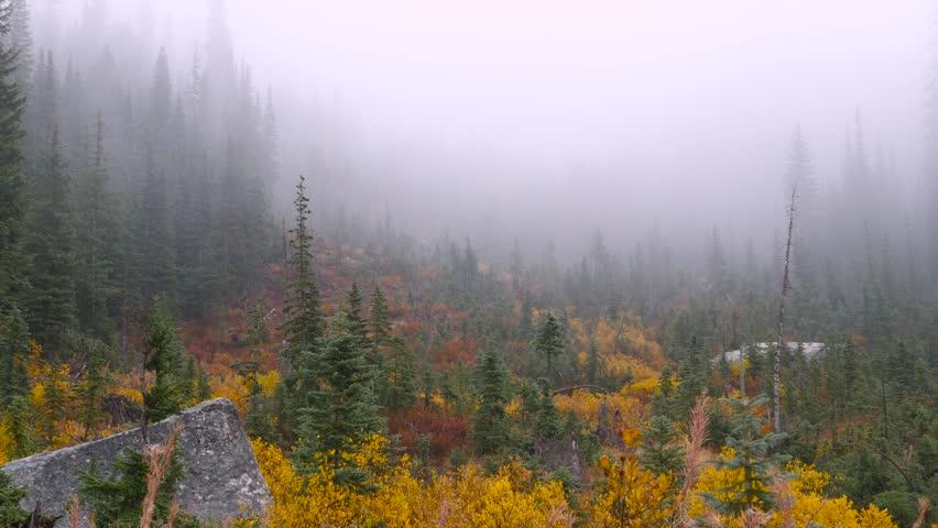 Forest shrouded in mist. Fog in autumn fir forest. North Cascades National Park. Washington state. Landscape video. 4K, 3840*2160, high bit rate, UHD | Shutterstock HD Video #14856943