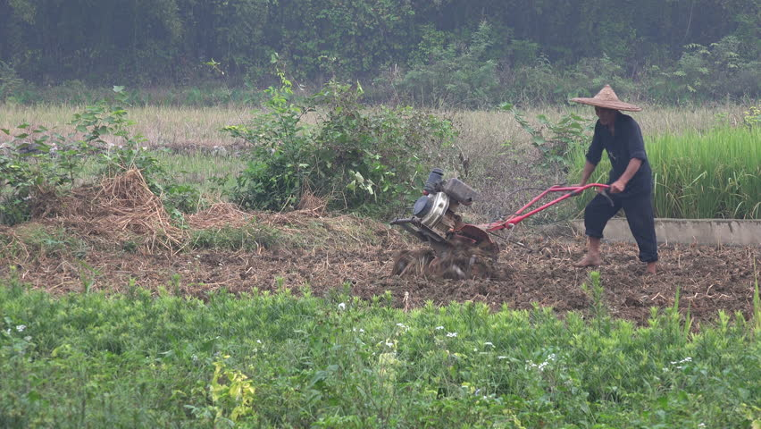 YANGSHUO, CHINA - 29 OCTOBER 2015: A farmer uses a motorized plow on a rice paddy field in rural China