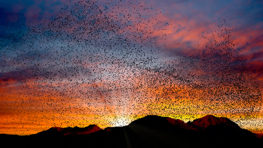 Flock of birds swarming against a sunset sky over mountains