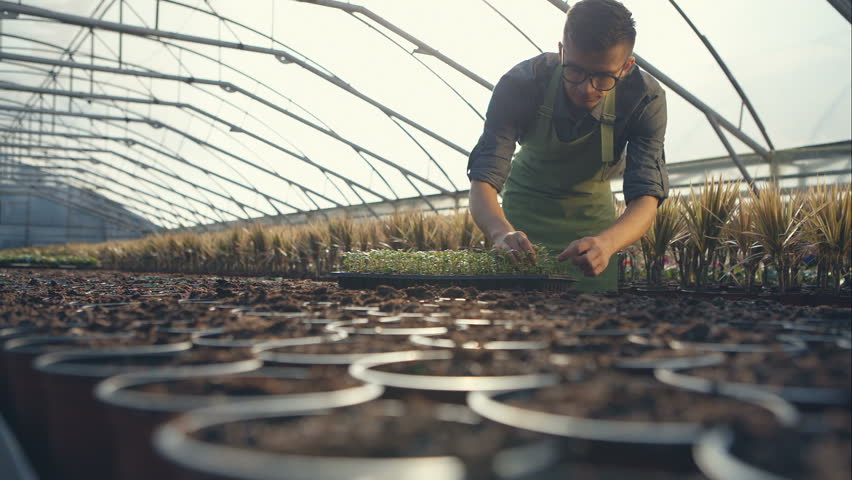 Gardeners working at the greenhouse seedlings successfully puts. RAW video record.