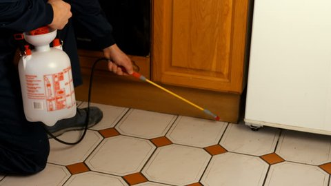 Man doing pest control in a kitchen