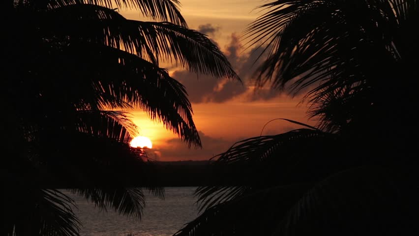 Sunset through palm tree leafs silhouette  #15373663