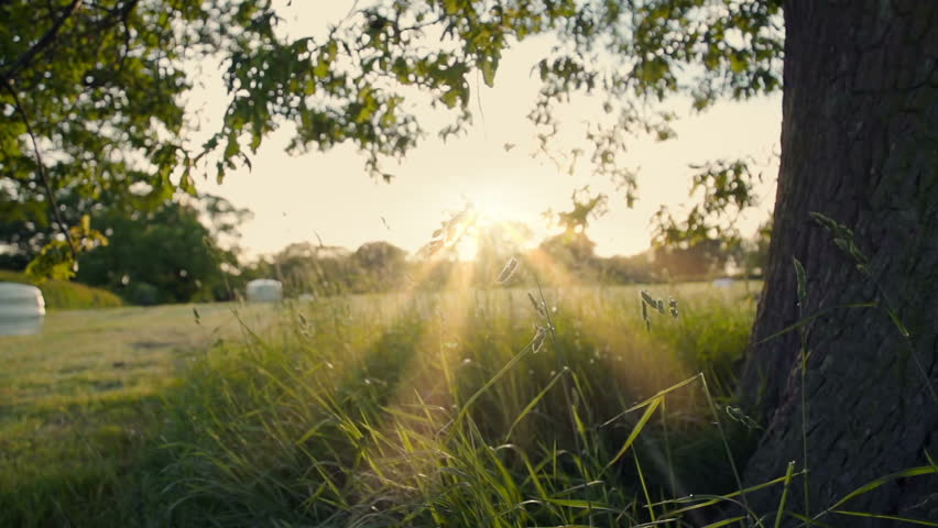 Under An English Oak Tree At Sunset. Filmed early summer at 240fps of the British landscape. | Shutterstock HD Video #15444583