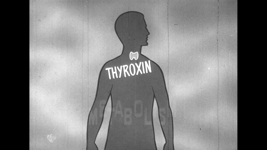 Header of metabolism