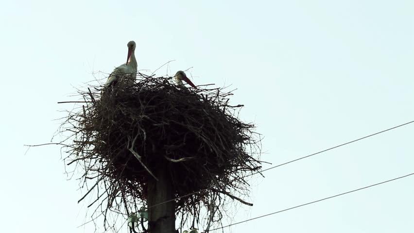 Breathtaking scenery. The stork's nest.   Shutterstock HD Video #15628705