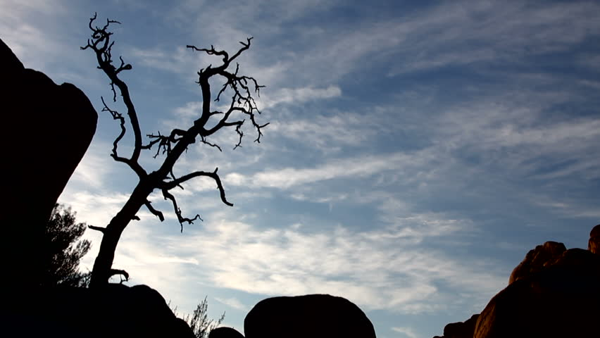 A time lapse of clouds. A dead tree is silhouetted in the foreground.
