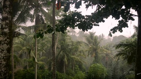 4k footage of heavy rain in the jungle in Ubud, Bali during the day.