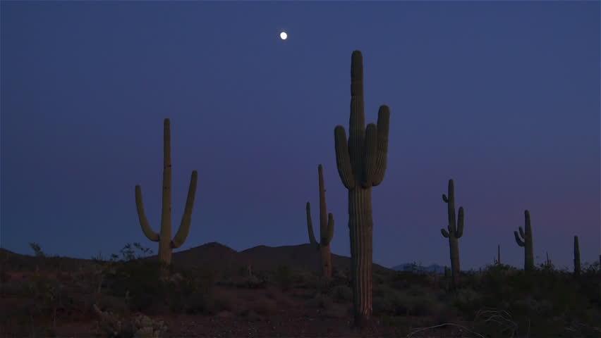 SLOW MOTION CLOSE UP: Full moon on a night sky above big beautiful saguaro cactus in amazing Arizona desert wilderness after dark