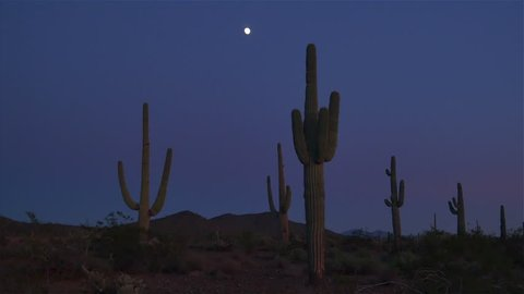 SLOW MOTION CLOSE UP: Full moon on a night sky above big beautiful saguaro cactus in amazing Arizona desert wilderness after dark