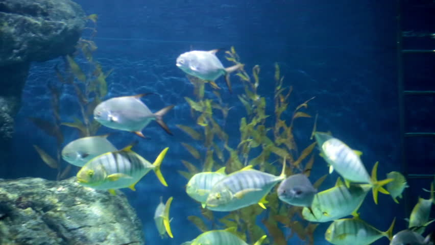 Tropical fishes at stones and corals     Shutterstock HD Video #16011943