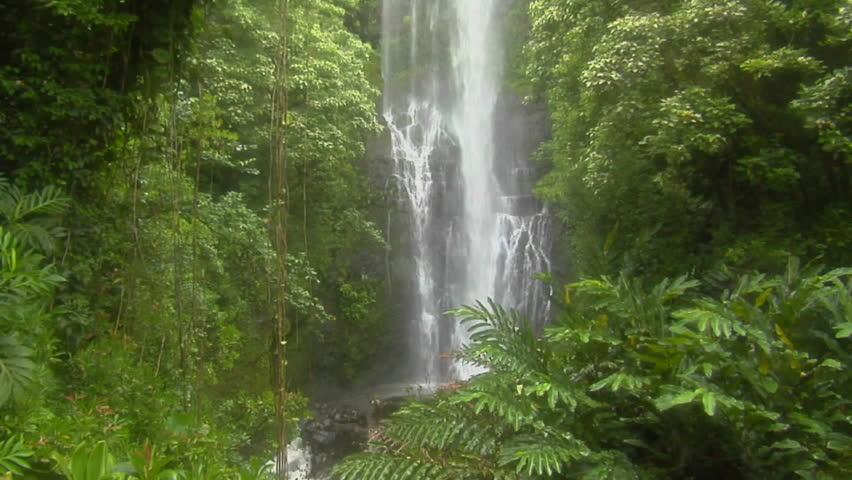 A tropical waterfall flows through a dense rainforest in Hawaii