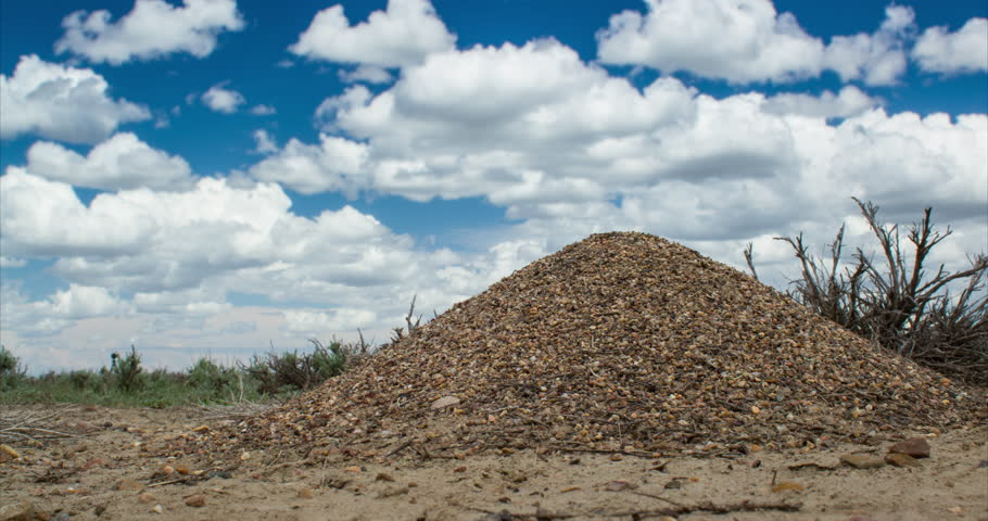 Timelapse of ants on anthill with clouds and blue sky in the prairie of Montana - 140604 APR 7D AntHill TL 103EOS7D 2