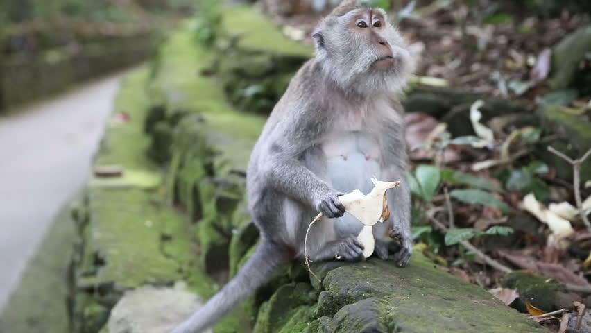monkey licking pussy