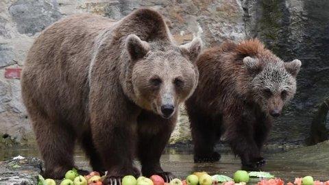 Mother bear with teddy bear