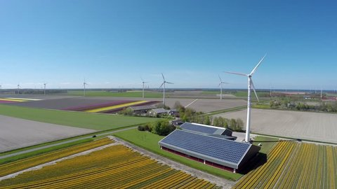 Aerial flying backwards over colorful yellow tulip field also showing wind turbines and farm shed with solar panel roof providing renewable energy to homes polder landscape during springtime 4k