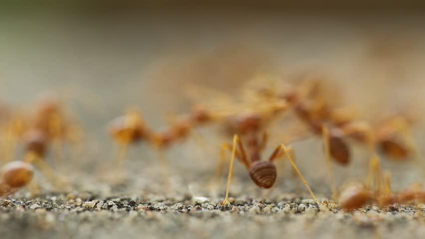 ants travel on concrete stock footage video 1331347 shutterstock. Black Bedroom Furniture Sets. Home Design Ideas