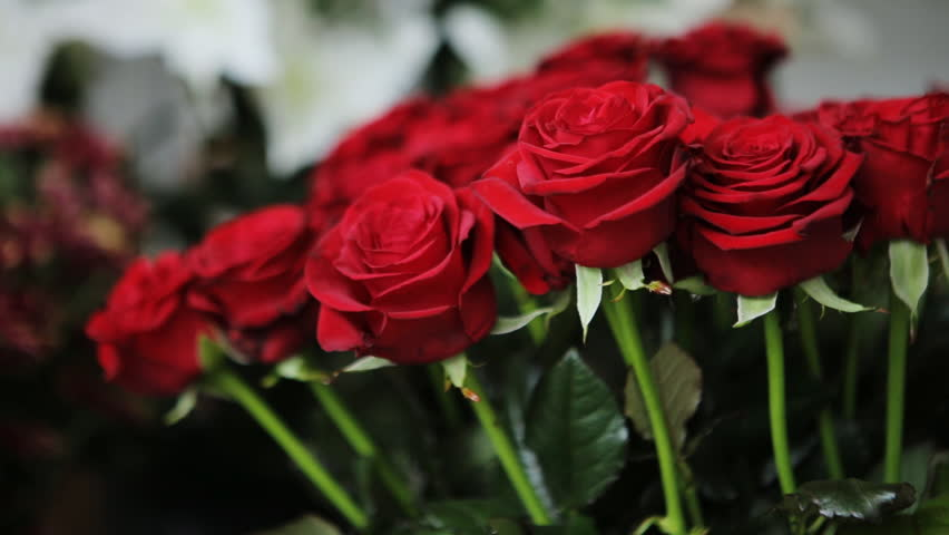 Amazing Bouquet of Red Roses. Stock Footage Video (100% Royalty-free) 16805803 | Shutterstock