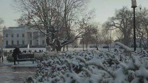 Snow covered bush in park opposite White House in Washington D.C.. Washington DC - USA: January, 2016