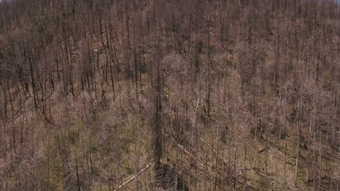 An interesting aerial shot of flying over burned forrests on a mountain side after a large wildfire