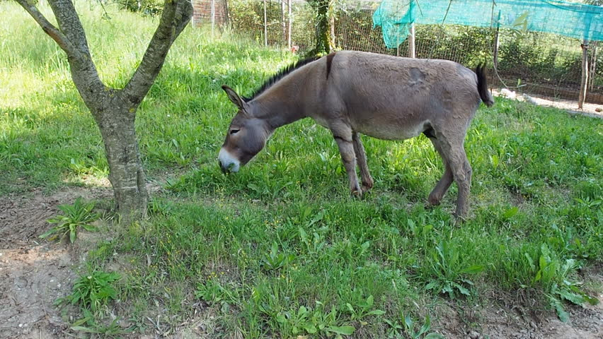 donkey hd image के लिए इमेज परिणाम