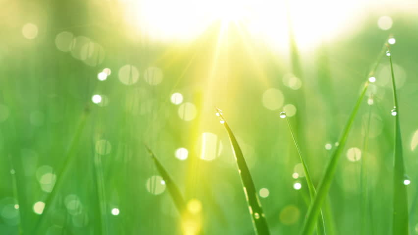 blurred grass background with water drops and rays of sun. HD shot with motorized slider.