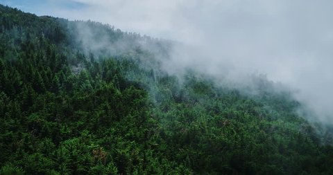 Misty forest, aerial view flying through the clouds