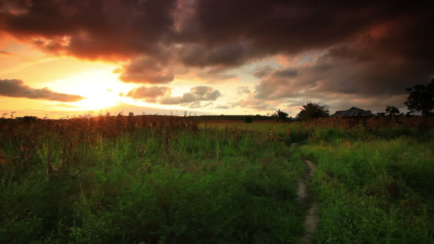 Children run through a cornfield at sunset near a village in Kenya two hours